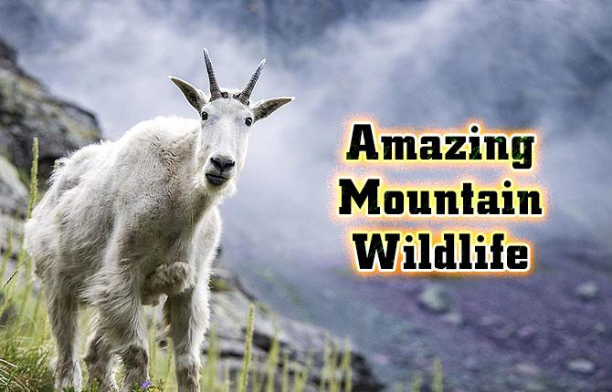 Photo of Amazing Mountain Wildlife